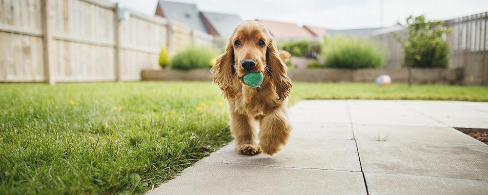canine-muppetsland-boussoit